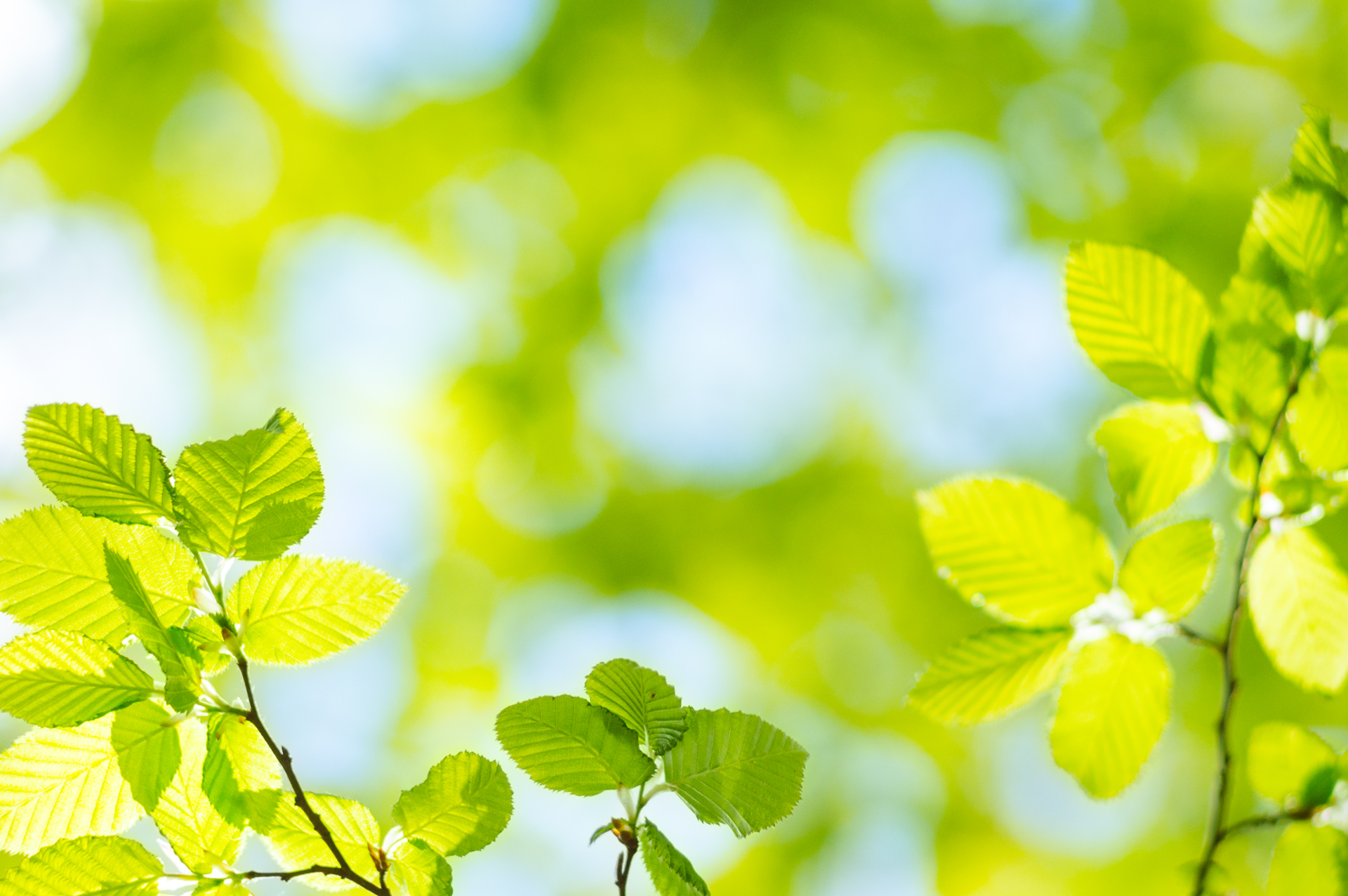 Spring green Leafs – defocused Background